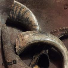 Waterbuffel hoorn 15-25 cm