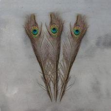 Set van 3 pauwenveren - 43cm