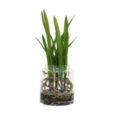 HK Living Gewortelde cymbidium orchidee vaas