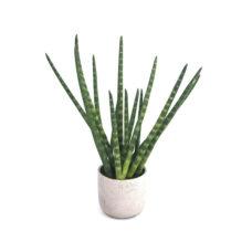 Kunstplant - Fake Plant 28
