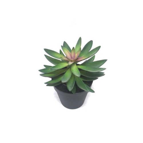 Nepplant - Succulent vetplant 18cm