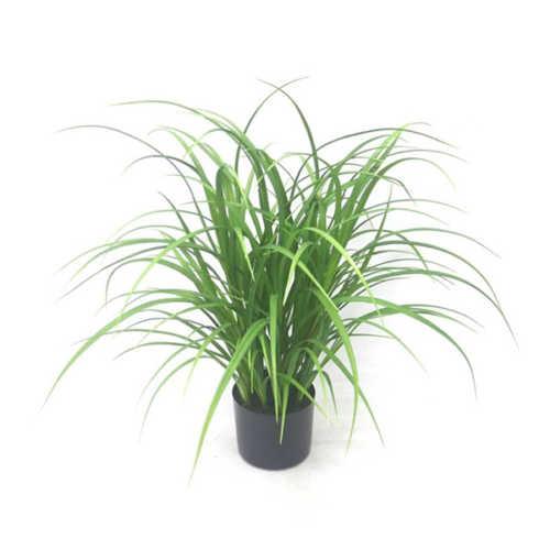 Nepplant - Gras