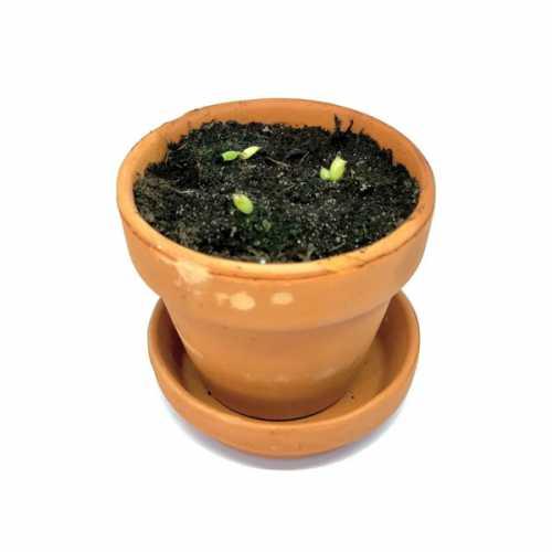 Grow You Ownn Kweekset - Schoonmoedersstoel cactus