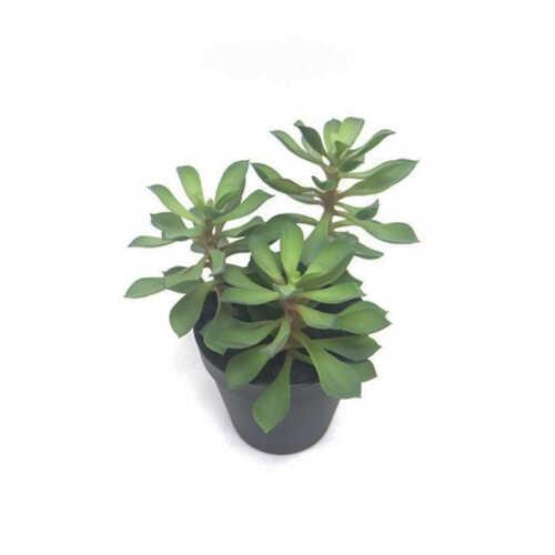 Nepplant - Succulent Vetplant op steel
