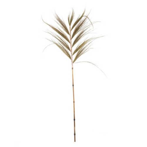Graan blad pluimen 20x140cm - Naturel