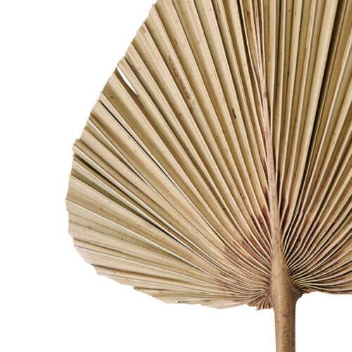 Palmblad PLANTAE 20x50cm - Naturel