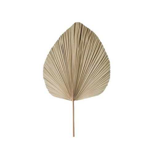 Palmblad PLANTAE 40x54cm - Naturel