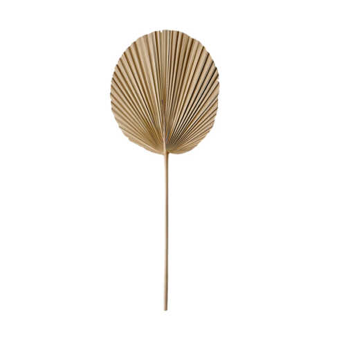 Palmblad PLANTAE 30x70cm - Naturel